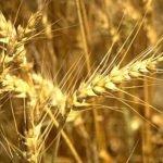 Сельское хозяйство Карфагена